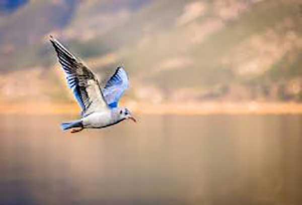 A madarak evolúciójának kulcsfontosságú láncszeme volt egy 100 millió éve élt teremtmény