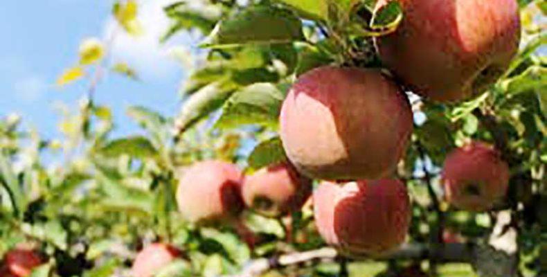 A tizenhárom almafa című darab bemutatójára készül a Békéscsabai Jókai Színház